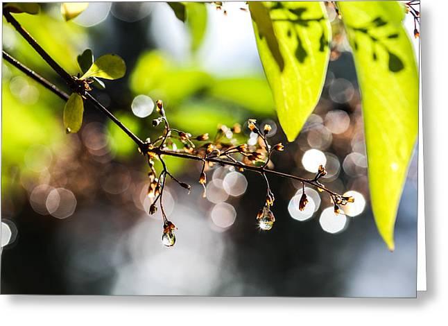 Rain Drop Greeting Cards - New Rain Greeting Card by Aaron Aldrich