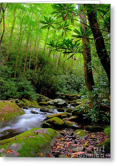 Flowing Stream Greeting Cards - New Season Along The River 2 Greeting Card by Michael Eingle