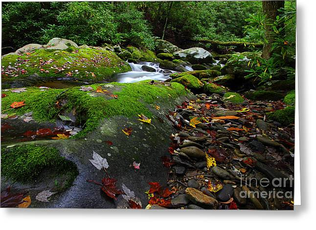 Flowing Stream Greeting Cards - New Season Along The River Greeting Card by Michael Eingle