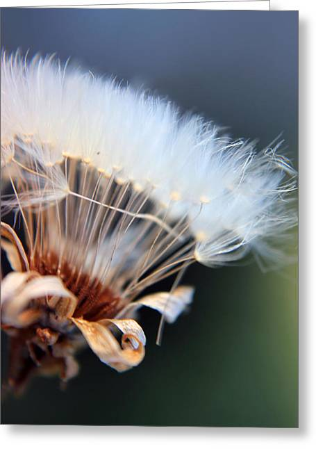 Kelly Photographs Greeting Cards - New Seed Greeting Card by Kelly Howe
