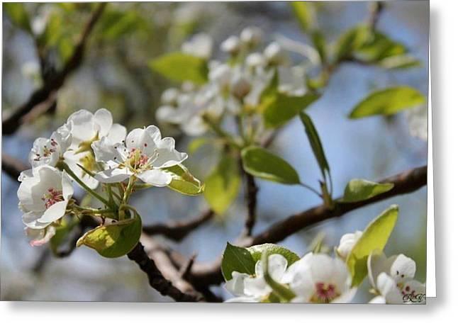 New Spring Beginnings Greeting Card by Brittany Danko