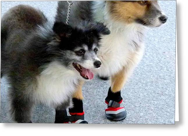 Collie Greeting Cards - New Winter Boots Greeting Card by Will Borden