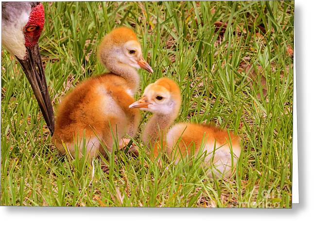 Caring Mother Greeting Cards - New World Greeting Card by Zina Stromberg