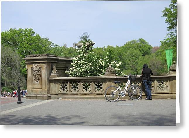 York Greeting Cards - New York City - Central Park - 121210 Greeting Card by DC Photographer