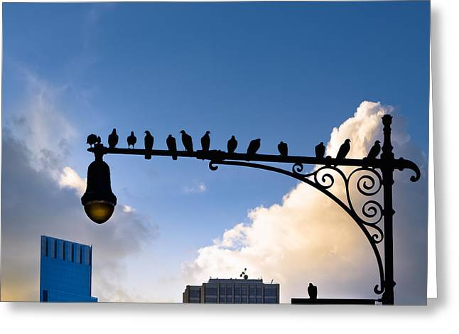 Gaggle Greeting Cards - New York City is for the Birds Greeting Card by Mark Tisdale
