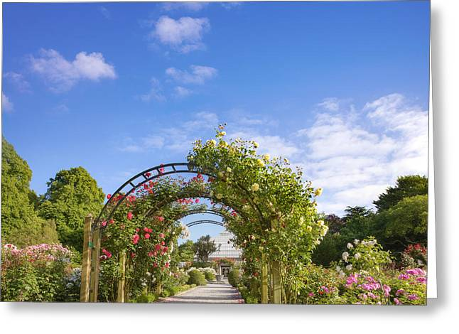 New Zealand Photographs Greeting Cards - New Zealand Christchurch Hagley Park Rose Garden Summer Greeting Card by Colin and Linda McKie