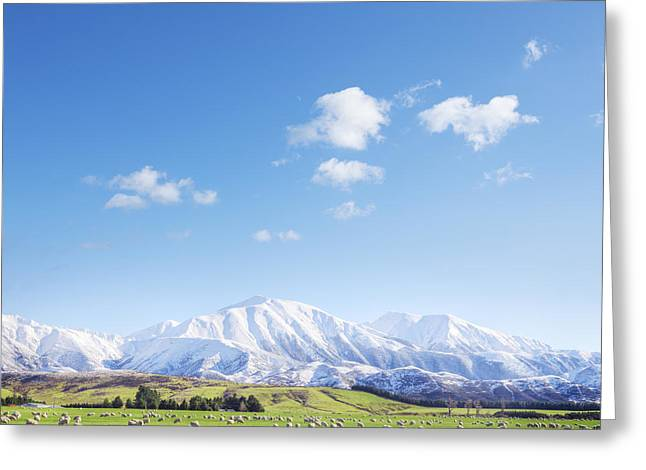 Beautiful Greeting Cards - New Zealand Farmland Square Greeting Card by Colin and Linda McKie