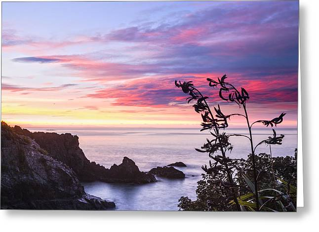 Calm Greeting Cards - New Zealand Marlborough Sunrise Greeting Card by Colin and Linda McKie