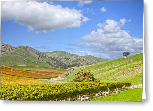 Vineyard Photographs Greeting Cards - New Zealand Marlborough Vineyard in Autumn Greeting Card by Colin and Linda McKie