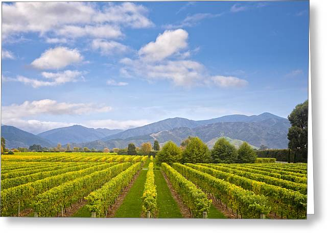 Vineyard Landscape Greeting Cards - New Zealand Marlborough Vineyard in Early Autumn Greeting Card by Colin and Linda McKie