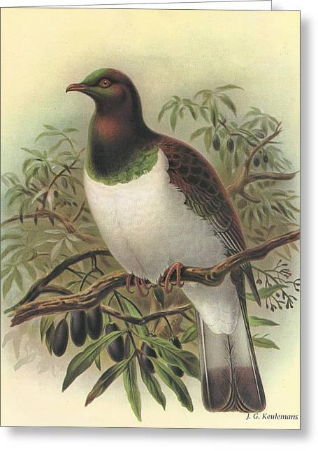 Audubon Greeting Cards - New Zealand Pigeon Greeting Card by J G Keulemans
