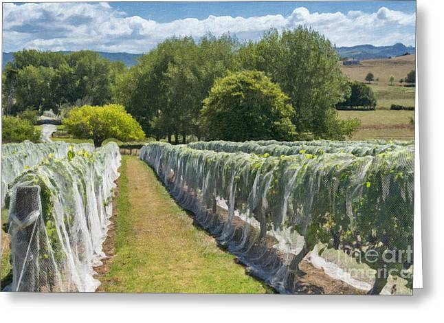Netting Greeting Cards - New Zealand Winery Greeting Card by Sheldon Kralstein