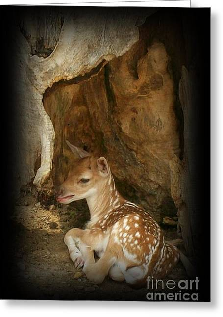 Fawn Mixed Media Greeting Cards - Newborn Fawn Greeting Card by Sara  Raber