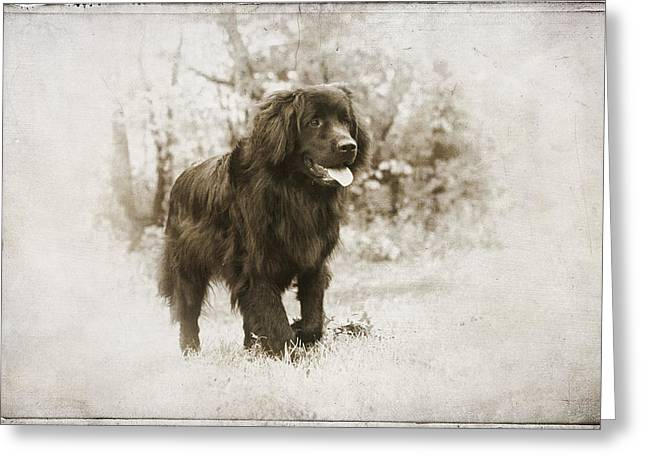 Newfoundland Puppy Greeting Cards - Newfoundland Friend Greeting Card by Annette Persinger