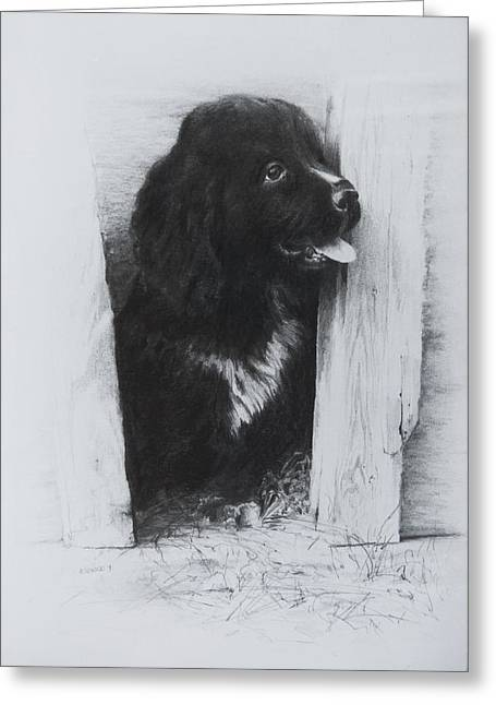 Puppies Drawings Greeting Cards - Newfoundland Puppy Greeting Card by Rachel Christine Nowicki