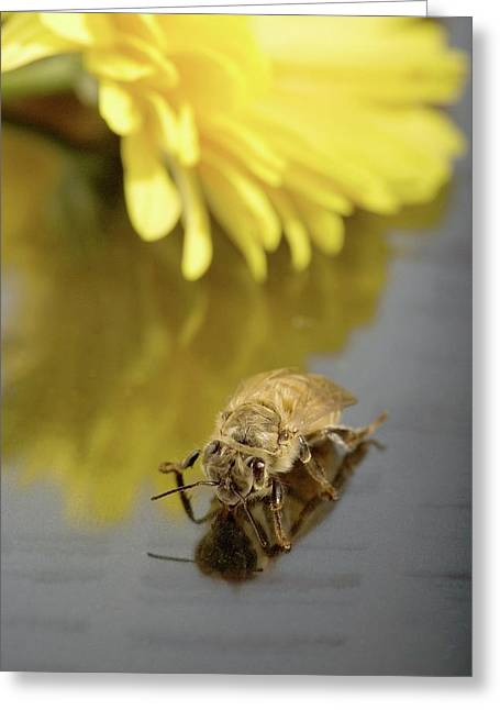 Newly Emerged Honey Bee Greeting Card by Peggy Greb/us Department Of Agriculture
