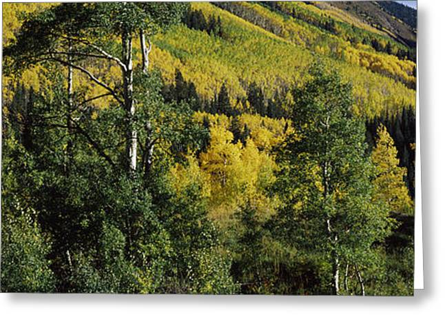 Newlyweds Greeting Cards - Newlywed Couple In A Forest, Aspen Greeting Card by Panoramic Images