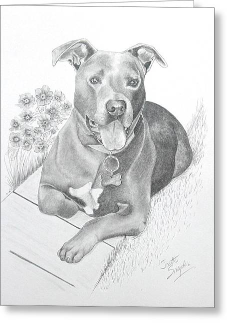 Rescue Drawings Greeting Cards - Newman Greeting Card by Joette Snyder