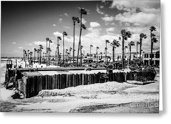 American Fleet Greeting Cards - Newport Beach Dory Fishing Fleet Black and White Picture Greeting Card by Paul Velgos