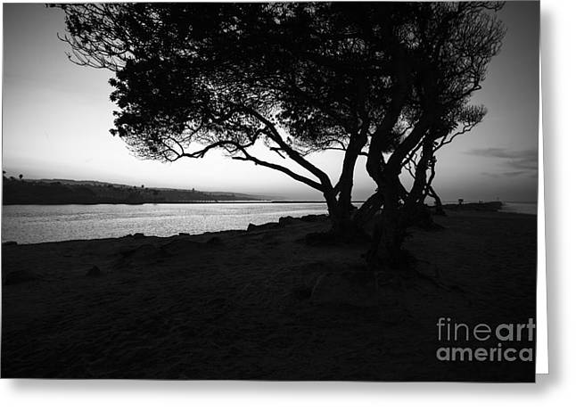 Jetty View Park Greeting Cards - Newport Beach Jetty Tree Black and White Photo Greeting Card by Paul Velgos