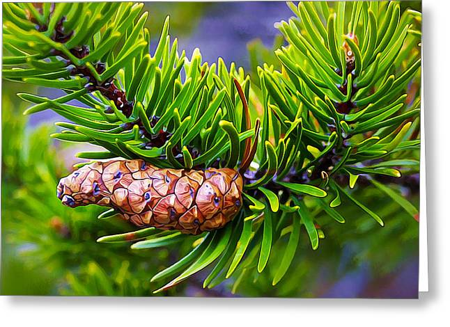 Fir Trees Greeting Cards - Next Generation Greeting Card by Bill Caldwell -        ABeautifulSky Photography