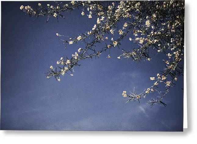 Blooming Tree Greeting Cards - Next Time Ill Be Sweeter Greeting Card by Laurie Search