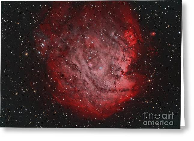 Star Formation Greeting Cards - Ngc 2174, The Monkey Head Nebula Greeting Card by Reinhold Wittich