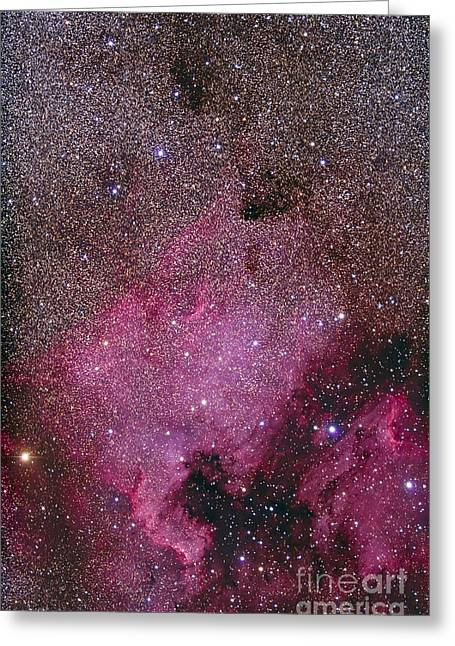 Deneb Greeting Cards - Ngc 7000 And The Pelican Nebula Greeting Card by Alan Dyer
