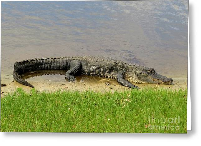 Alligator Greeting Cards - Nice and quiet Greeting Card by Zina Stromberg