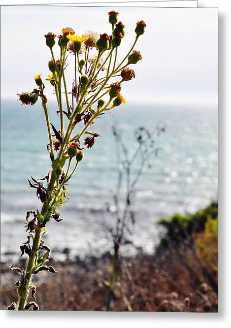 Coast Highway One Greeting Cards - Nicholas Canyon County Beach Greeting Card by Kyle Hanson