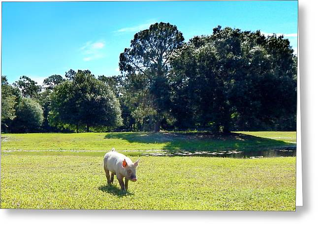 Porcine Animal Greeting Cards - Nicki Morning Walk Greeting Card by To-Tam Gerwe