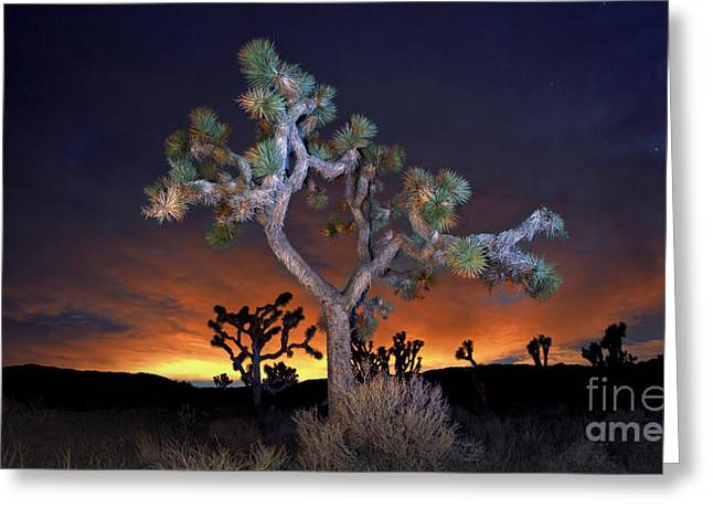 Joshua Tree National Park Greeting Cards - Night Bloom Greeting Card by Marco Crupi