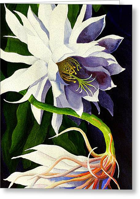 Night Blooming Cereus Greeting Card by Janis Grau