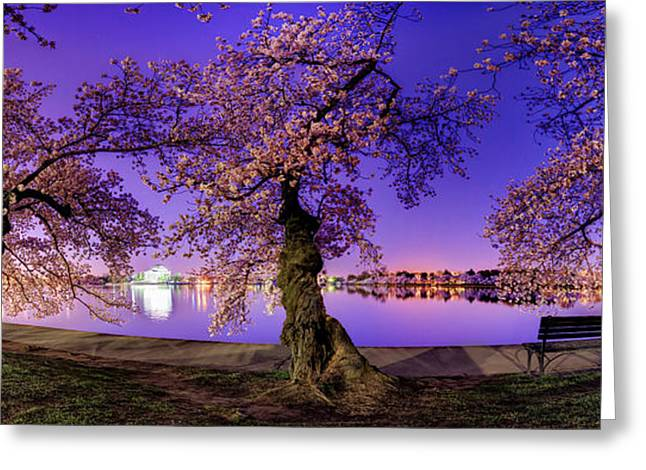 Reflection Greeting Cards - Night Blossoms 2014 Greeting Card by Metro DC Photography