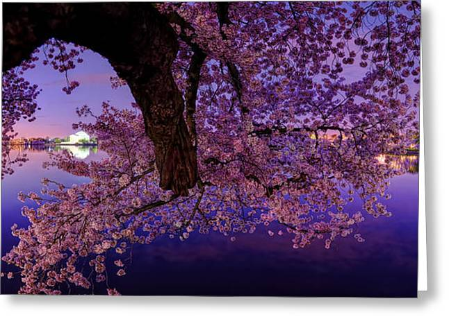 Flags Greeting Cards - Night Blossoms Greeting Card by Metro DC Photography