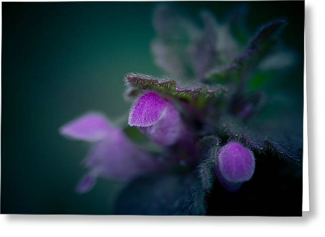 Purples Greeting Cards - Night Closes In Greeting Card by Shane Holsclaw
