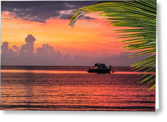 Jamaican Sunsets Greeting Cards - Night Dive Greeting Card by Todd Reese