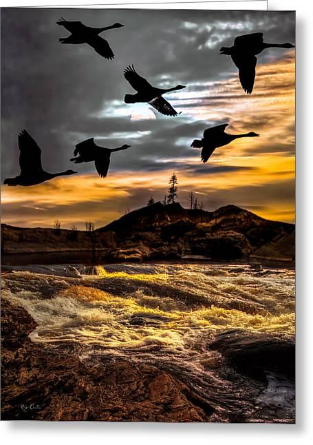Hunting Bird Greeting Cards - Night Flight Greeting Card by Bob Orsillo