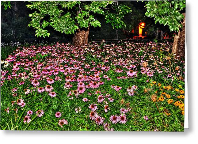 Washington Square Park Greeting Cards - Night Flowers at Washington Square Park Greeting Card by Randy Aveille