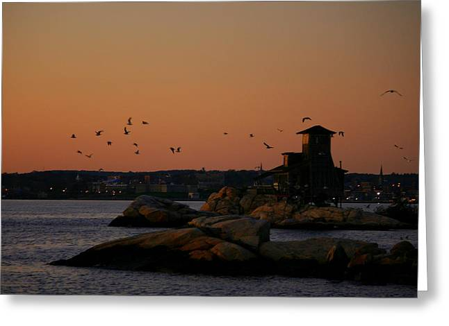 Birds In Flight At Night Greeting Cards - Night Flying   Greeting Card by Neal  Eslinger