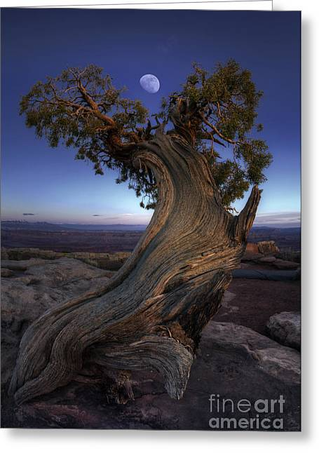 Award Photographs Greeting Cards - Night Guardian of the Valley Greeting Card by Marco Crupi