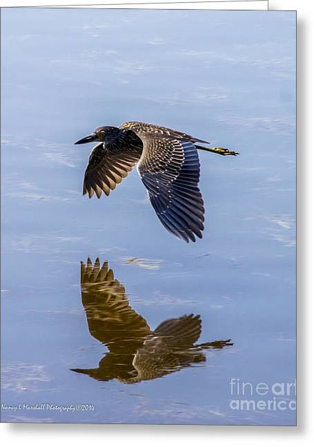 J N Ding Darling National Wildlife Refuge Greeting Cards - Night Heron Fly By 1 Greeting Card by Nancy L Marshall
