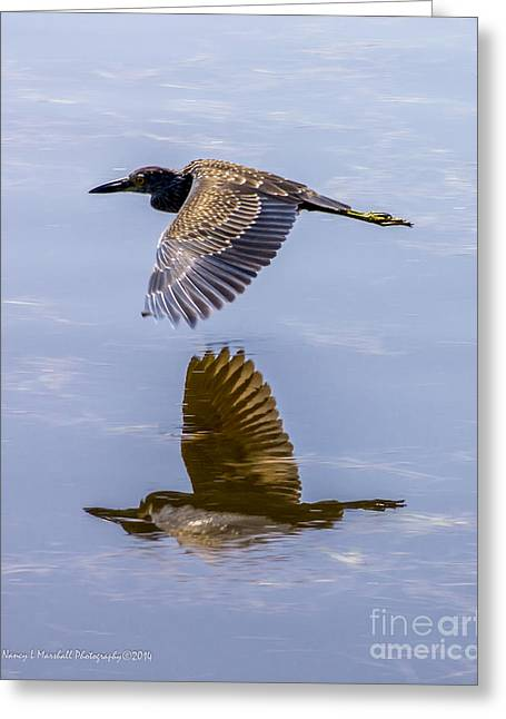 J N Ding Darling National Wildlife Refuge Greeting Cards - Night Heron Fly By 2 Greeting Card by Nancy L Marshall