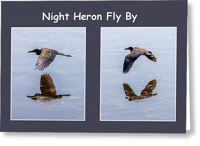 J N Ding Darling National Wildlife Refuge Greeting Cards - Night Heron Greeting Card by Nancy L Marshall