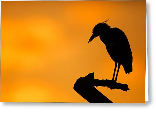 Egret Greeting Cards - Night Heron Silhouette Greeting Card by Andres Leon