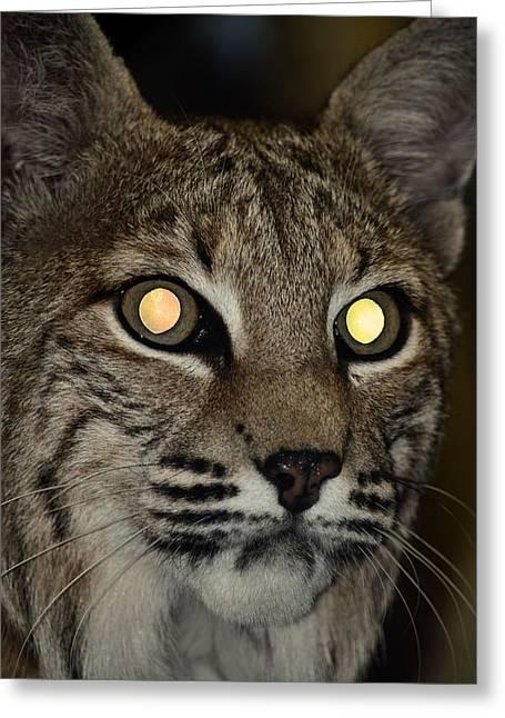 Bobcats Greeting Cards - Night of the Bobcat Greeting Card by Maria Urso