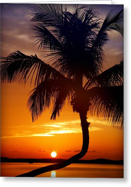 Night Of The Sun Greeting Card by Karen Wiles