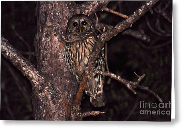 Owl Photography Greeting Cards - Night Owl Greeting Card by Al Powell Photography USA
