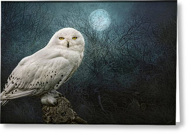 Snowy Night Night Greeting Cards - Night Owl Greeting Card by Brian Tarr