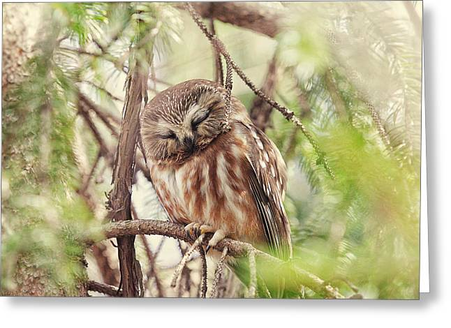 Saw Greeting Cards - Night Owl Greeting Card by Carrie Ann Grippo-Pike
